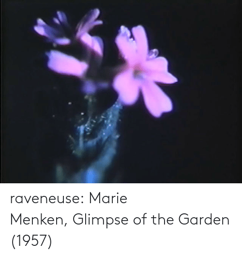 marie: raveneuse:  Marie Menken, Glimpse of the Garden (1957)