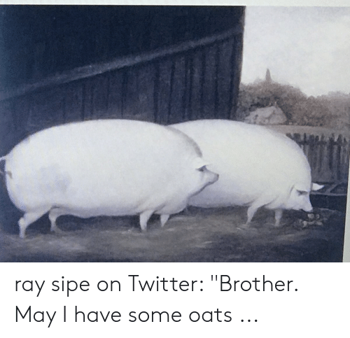 "Twitter, Brother, and Ray: ray sipe on Twitter: ""Brother. May I have some oats ..."