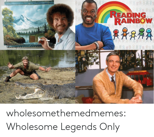 reading rainbow: READING  RAINBOW wholesomethemedmemes: Wholesome Legends Only