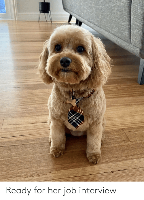 Job interview: Ready for her job interview