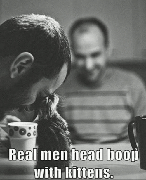 real men: Real men head boou  with Kittens.