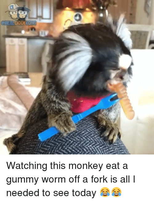 gummy worms: @REALDDDY KONG Watching this monkey eat a gummy worm off a fork is all I needed to see today 😂😂