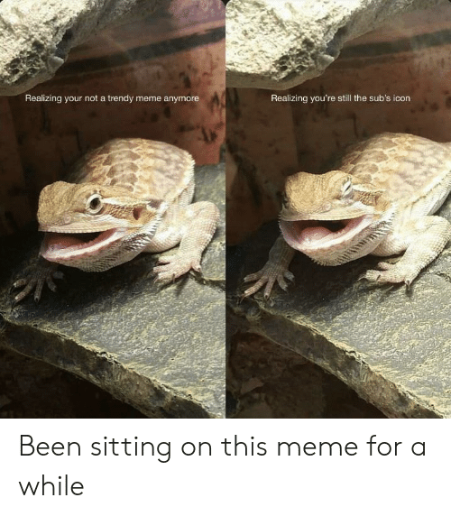 Meme, Been, and Trendy: Realizing your not a trendy meme anymore  Realizing you're still the sub's icon Been sitting on this meme for a while