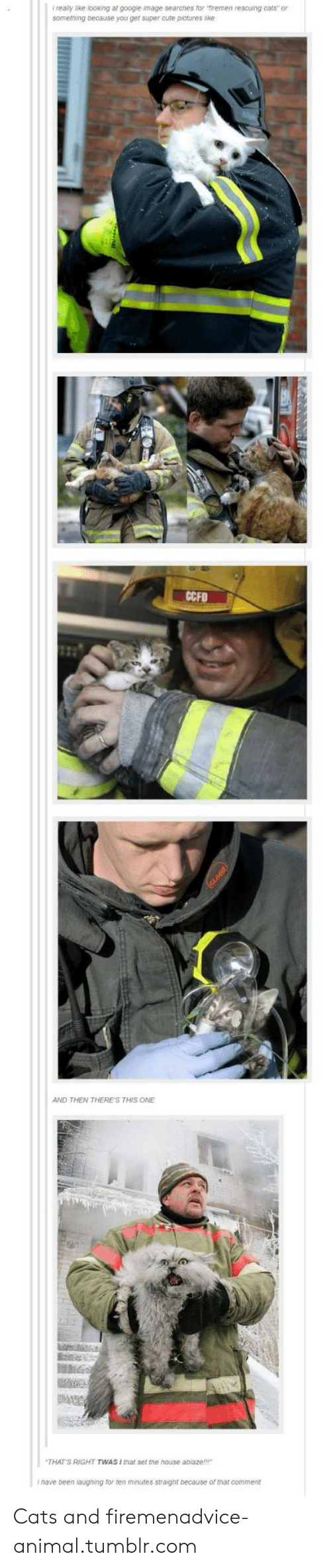 Advice, Cats, and Cute: realy like looking at googie image searches for firemen rescuing cats or  something because you get super cute pictures ike  CCFD  AND THEN THERE'S THIS ONE  THAT S RIGHT TWAS I that set the house ablaze!!  ihave been laughing for ten minutes straight because of that comment Cats and firemenadvice-animal.tumblr.com