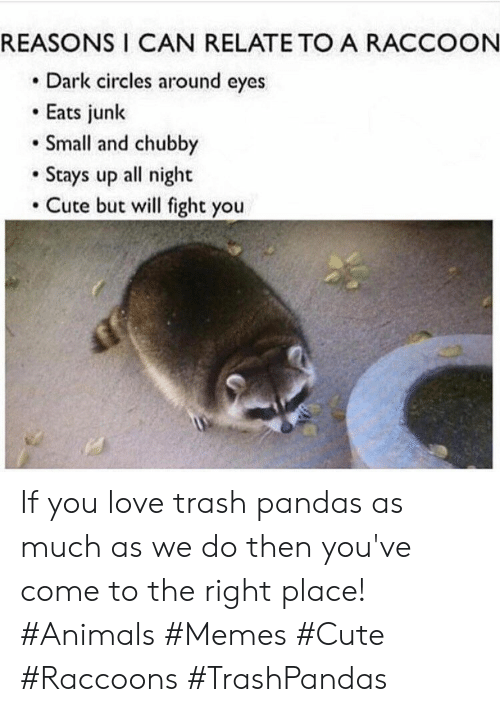 Animals Memes: REASONS I CAN RELATE TO A RACCOON  Dark circles around eyes  Eats junk  Small and chubby  Stays up all night  Cute but will fight you If you love trash pandas as much as we do then you've come to the right place! #Animals #Memes #Cute #Raccoons #TrashPandas
