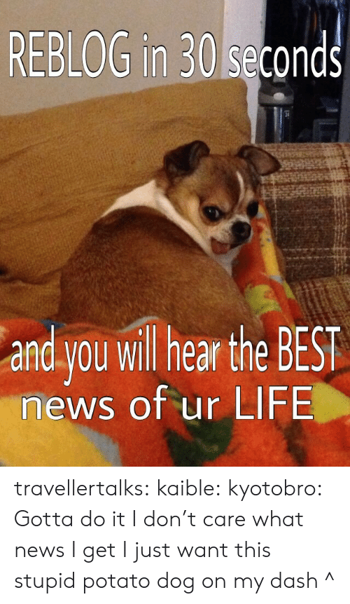 Life, News, and Target: REBLOG in 30 seconds  and you wil hear the BEST  news of ur LIFE travellertalks:  kaible:  kyotobro:  Gotta do it  I don't care what news I get I just want this stupid potato dog on my dash  ^