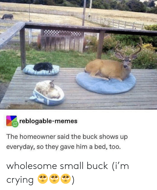 buck: reblogable-memes  The homeowner said the buck shows up  everyday, so they gave him a bed, too. wholesome small buck (i'm crying 🥺🥺🥺)