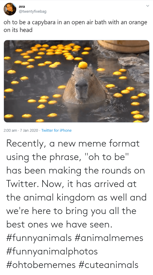 "phrase: Recently, a new meme format using the phrase, ""oh to be"" has been making the rounds on Twitter. Now, it has arrived at the animal kingdom as well and we're here to bring you all the best ones we have seen. #funnyanimals #animalmemes #funnyanimalphotos #ohtobememes #cuteanimals"