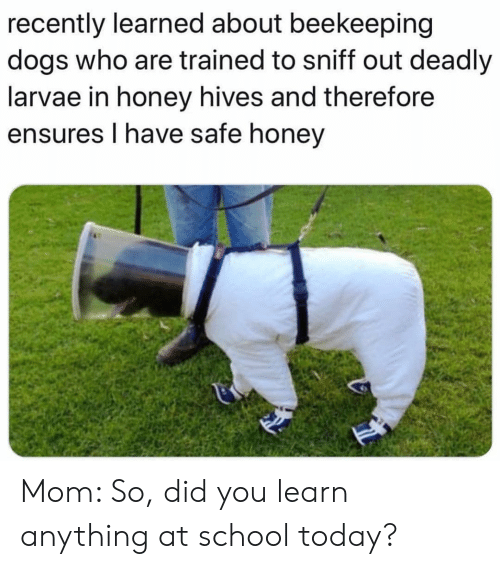 hives: recently learned about beekeeping  dogs who are trained to sniff out deadly  larvae in honey hives and therefore  ensures I have safe honey Mom: So, did you learn anything at school today?