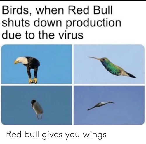 bull: Red bull gives you wings
