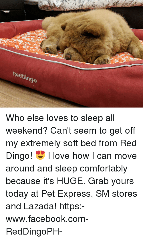 Facebook, Love, and Memes: RedDingo Who else loves to sleep all weekend? Can't seem to get off my extremely soft bed from Red Dingo! 😍 I love how I can move around and sleep comfortably because it's HUGE. Grab yours today at Pet Express, SM stores and Lazada! https:-www.facebook.com-RedDingoPH-