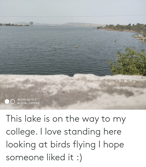 birds flying: REDMI NOTE 7  AI DUAL CAMERA This lake is on the way to my college. I love standing here looking at birds flying I hope someone liked it :)