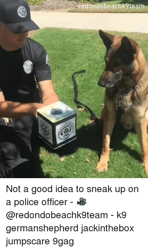 9gag, Memes, and Police: redondobeachk9team Not a good idea to sneak up on a police officer - 🎥@redondobeachk9team - k9 germanshepherd jackinthebox jumpscare 9gag