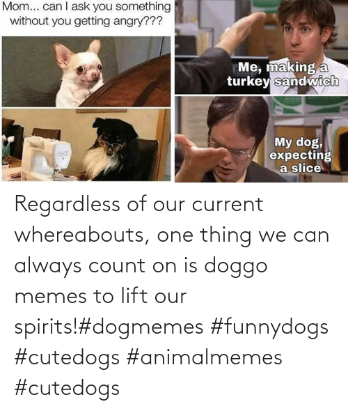 regardless: Regardless of our current whereabouts, one thing we can always count on is doggo memes to lift our spirits!#dogmemes #funnydogs #cutedogs #animalmemes #cutedogs