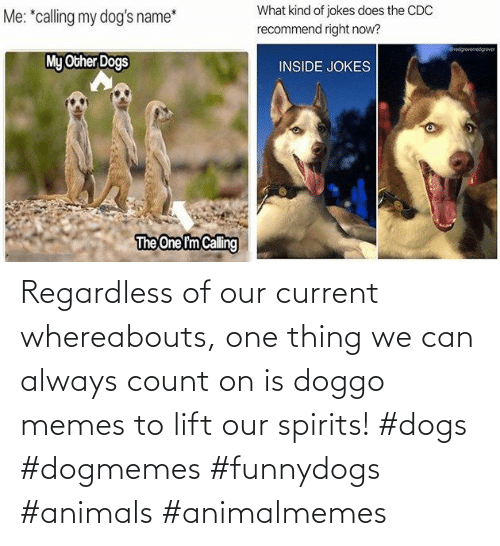 Memes To: Regardless of our current whereabouts, one thing we can always count on is doggo memes to lift our spirits! #dogs #dogmemes #funnydogs #animals #animalmemes