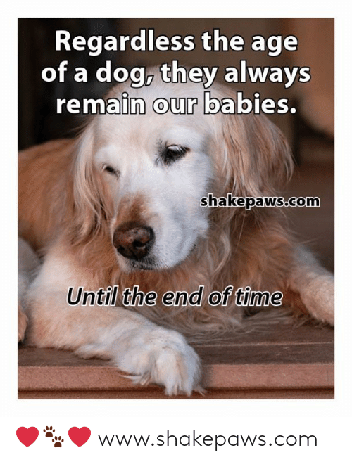 Memes, Time, and Until the End of Time: Regardless the age  of a dog, they always  remain our babies.  shakepaws.com  Until the end of time ❤️🐾❤️ www.shakepaws.com