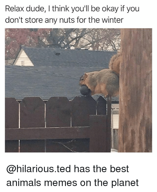 Animals Memes: Relax dude, I think you'll be okay if you  don't store any nuts for the winter @hilarious.ted has the best animals memes on the planet