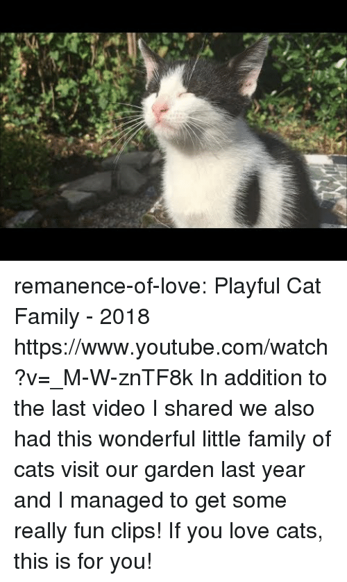 playful: remanence-of-love:  Playful Cat Family - 2018 https://www.youtube.com/watch?v=_M-W-znTF8k  In addition to the last video I shared we also had this wonderful little family of cats visit our garden last year and I managed to get some really fun clips! If you love cats, this is for you!