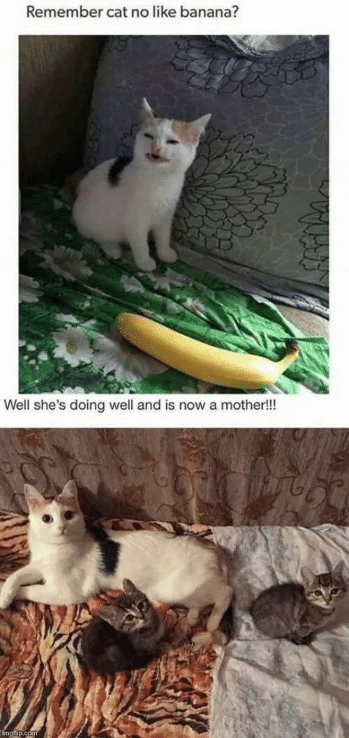 Banana, Cat, and Mother: Remember cat no like banana?  Well she's doing well and is now a mother!!