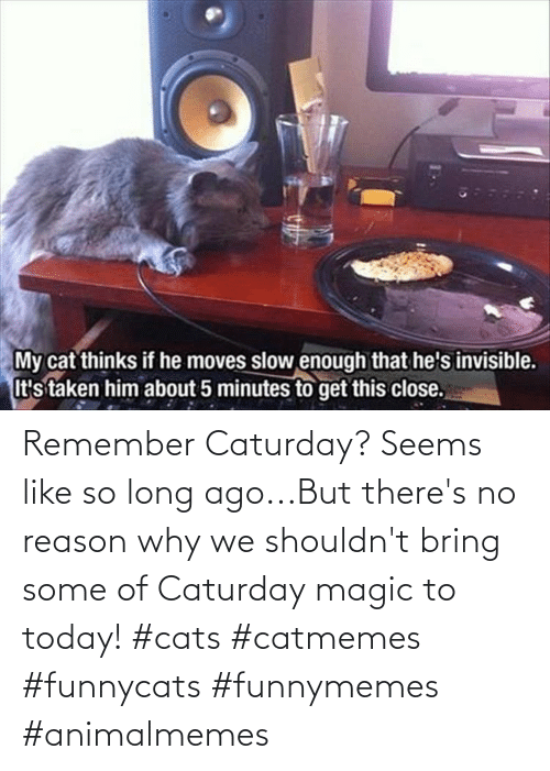 Magic: Remember Caturday? Seems like so long ago...But there's no reason why we shouldn't bring some of Caturday magic to today! #cats #catmemes #funnycats #funnymemes #animalmemes