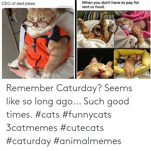 good times: Remember Caturday? Seems like so long ago... Such good times. #cats #funnycats 3catmemes #cutecats #caturday #animalmemes
