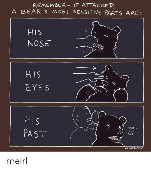 sensitive: REMEMBER- IF ATTACKED  A BEAR'S MOST SENSITIVE PARTS ARE  HIS  NOSE  HIS  EYES  SIH  PAST  THAT'S  NOT  FAIR  NATHANKPYLE meirl