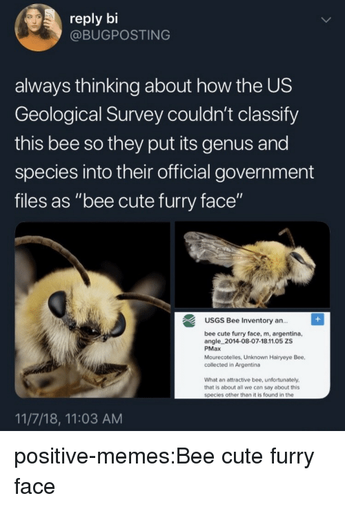 """Argentina: reply bi  @BUGPOSTING  always thinking about how the US  Geological Survey couldn't classify  this bee so they put its genus and  species into their official government  files as """"bee cute furry face""""  USGS Bee Inventory an..  ce, m, argentina,  angle 2014-08-07-18.11.05 ZS  PMax  Mourecotelles, Unknown Hairyeye Bee,  collected in Argentina  What an attractive bee, unfortunately  that is about all we can say about this  species other than it is found in the  11/7/18, 11:03 AM positive-memes:Bee cute furry face"""