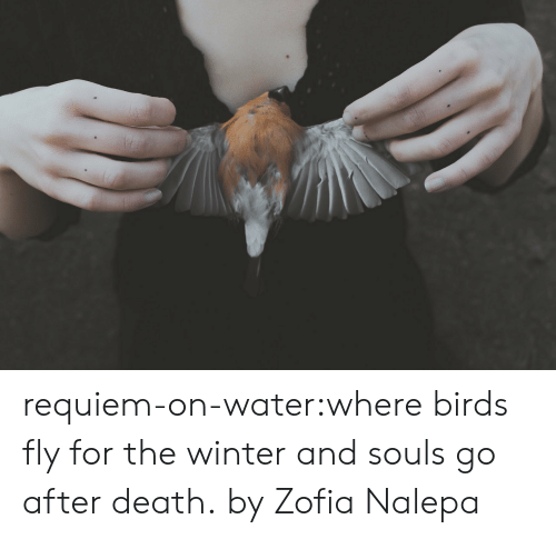 Souls: requiem-on-water:where birds fly for the winter and souls go after death. by Zofia Nalepa