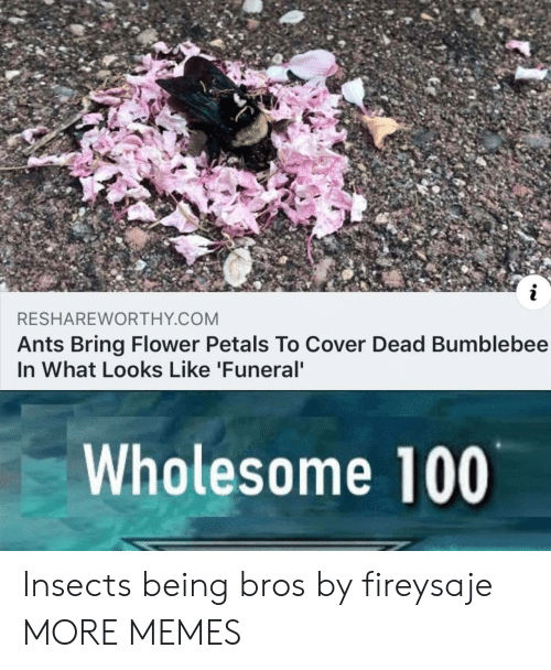 bumblebee: RESHAREWORTHY COM  Ants Bring Flower Petals To Cover Dead Bumblebee  In What Looks Like 'Funeral  Wholesome 100 Insects being bros by fireysaje MORE MEMES