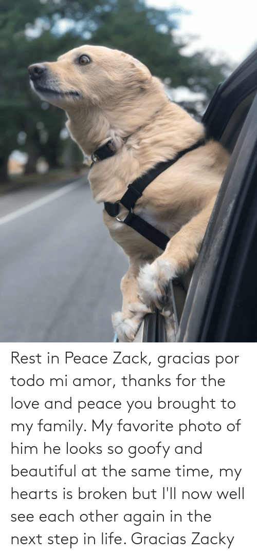 the next step: Rest in Peace Zack, gracias por todo mi amor, thanks for the love and peace you brought to my family. My favorite photo of him he looks so goofy and beautiful at the same time, my hearts is broken but I'll now well see each other again in the next step in life. Gracias Zacky