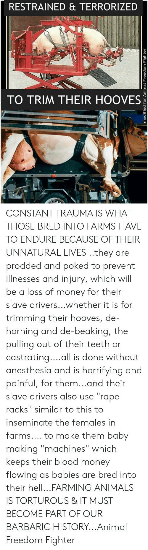 """Animals, Memes, and Money: RESTRAINED & TERRORIZED  c0  TO TRIM THEIR HOOVES CONSTANT TRAUMA IS WHAT THOSE BRED INTO FARMS HAVE TO ENDURE BECAUSE OF THEIR UNNATURAL LIVES ..they are prodded and poked to prevent illnesses and injury, which will be a loss of money for their slave drivers...whether it is for trimming their hooves, de-horning and de-beaking, the pulling out of their teeth or castrating....all is done without anesthesia and is horrifying and painful, for them...and their slave drivers also use """"rape racks"""" similar to this to inseminate the females in farms.... to make them baby making """"machines"""" which keeps their blood money flowing as babies are bred into their hell...FARMING ANIMALS IS TORTUROUS & IT MUST BECOME PART OF OUR BARBARIC HISTORY...Animal Freedom Fighter"""