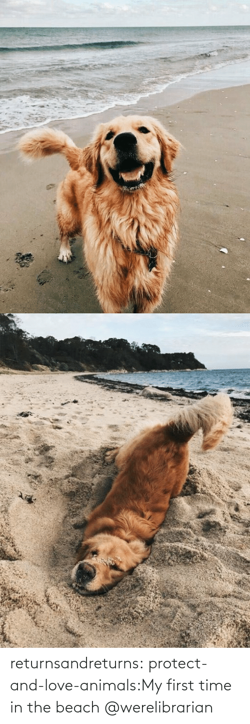Protect: returnsandreturns:  protect-and-love-animals:My first time in the beach @werelibrarian