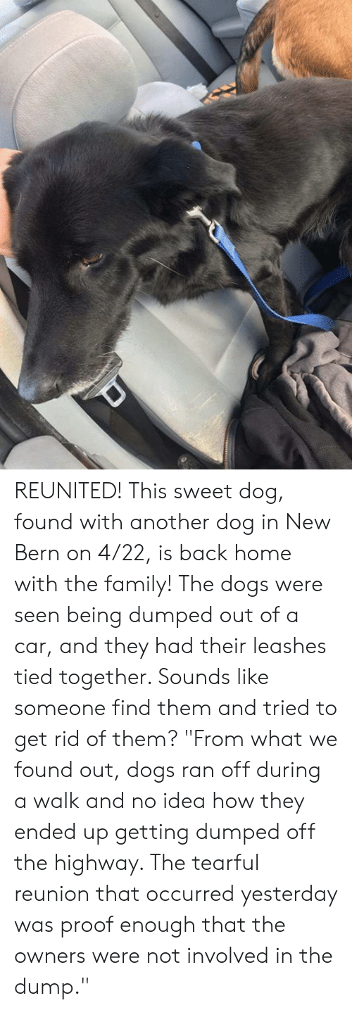 """getting dumped: REUNITED!  This sweet dog, found with another dog in New Bern on 4/22, is back home with the family! The dogs were seen being dumped out of a car, and they had their leashes tied together. Sounds like someone find them and tried to get rid of them?  """"From what we found out, dogs ran off during a walk and no idea how they ended up getting dumped off the highway. The tearful reunion that occurred yesterday was proof enough that the owners were not involved in the dump."""""""