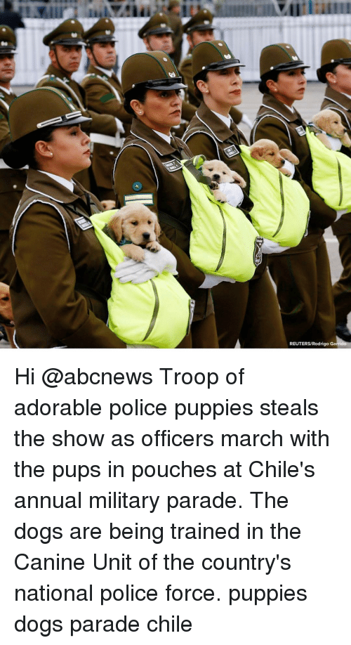 troop: REUTERS/Rodrigo Ga Hi @abcnews Troop of adorable police puppies steals the show as officers march with the pups in pouches at Chile's annual military parade. The dogs are being trained in the Canine Unit of the country's national police force. puppies dogs parade chile