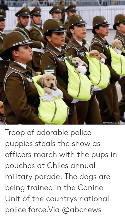 Rodrigo: REUTERS/Rodrigo Ga Troop of adorable police puppies steals the show as officers march with the pups in pouches at Chiles annual military parade. The dogs are being trained in the Canine Unit of the countrys national police force.Via @abcnews