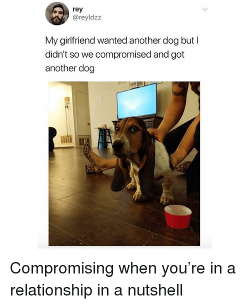 Memes, Rey, and Girlfriend: rey  @reyldzz  My girlfriend wanted another dog but l  didn't so we compromised and got  another dog Compromising when you're in a relationship in a nutshell
