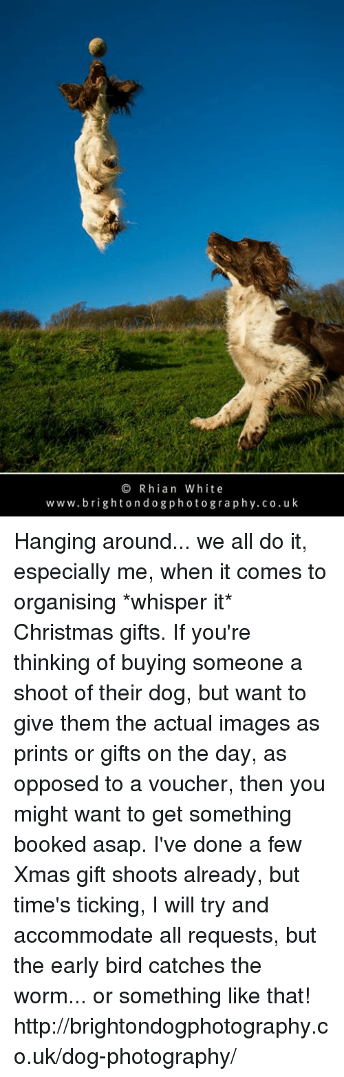 accommodating: Rhian White  w w w. brighton d o g photo gra p h y.co.uk Hanging around... we all do it, especially me, when it comes to organising *whisper it* Christmas gifts. If you're thinking of buying someone a shoot of their dog, but want to give them the actual images as prints or gifts on the day, as opposed to a voucher, then you might want to get something booked asap.   I've done a few Xmas gift shoots already, but time's ticking, I will try and accommodate all requests, but the early bird catches the worm... or something like that!  http://brightondogphotography.co.uk/dog-photography/