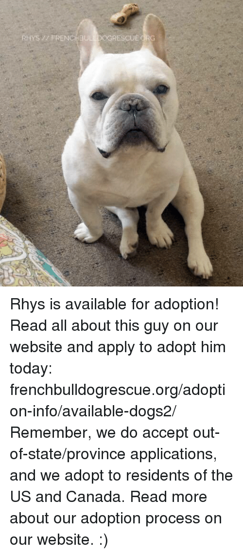 Applie: RHYS FRENCHBULLDOGRESCUEORG Rhys is available for adoption! Read all about this guy on our website <location, likes, dislikes> and apply to adopt him today: frenchbulldogrescue.org/adoption-info/available-dogs2/  Remember, we do accept out-of-state/province applications, and we adopt to residents of the US and Canada. Read more about our adoption process on our website. :)