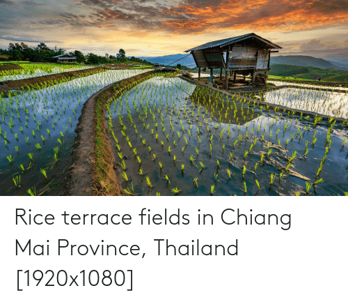 rice: Rice terrace fields in Chiang Mai Province, Thailand [1920x1080]