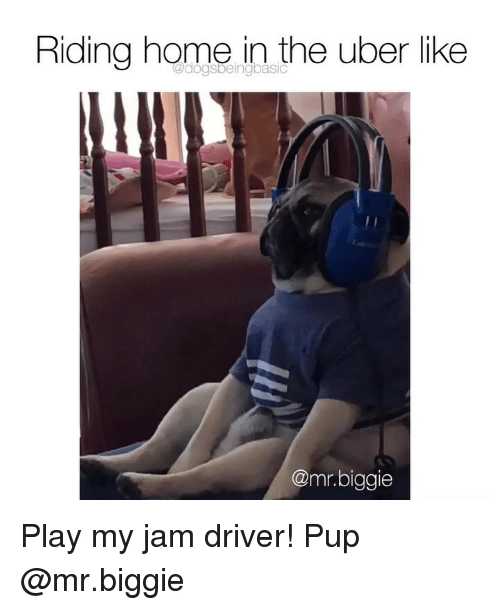 Memes, Uber, and Home: Riding home in the uber like  @mr.biggie Play my jam driver! Pup @mr.biggie