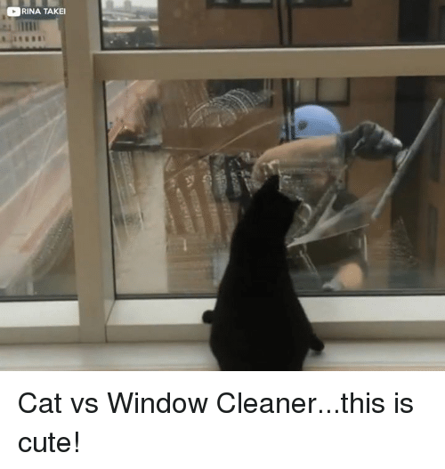 rina takei cat vs window cleaner this is cute 14695582 ✅ 25 best memes about cute cute memes