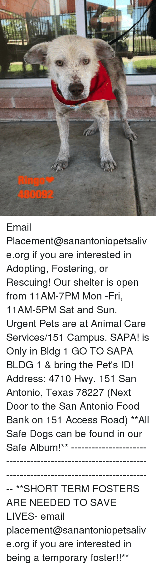 food bank: Ringo*  480092 Email Placement@sanantoniopetsalive.org if you are interested in Adopting, Fostering, or Rescuing!  Our shelter is open from 11AM-7PM Mon -Fri, 11AM-5PM Sat and Sun.  Urgent Pets are at Animal Care Services/151 Campus. SAPA! is Only in Bldg 1 GO TO SAPA BLDG 1 & bring the Pet's ID! Address: 4710 Hwy. 151 San Antonio, Texas 78227 (Next Door to the San Antonio Food Bank on 151 Access Road)  **All Safe Dogs can be found in our Safe Album!** ---------------------------------------------------------------------------------------------------------- **SHORT TERM FOSTERS ARE NEEDED TO SAVE LIVES- email placement@sanantoniopetsalive.org if you are interested in being a temporary foster!!**