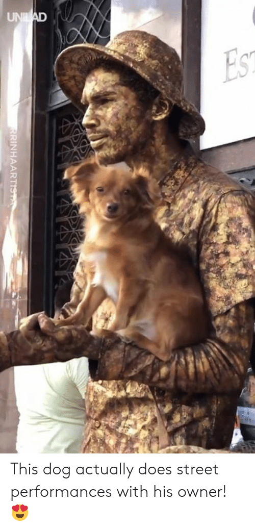 Dank, 🤖, and Dog: RINHAART This dog actually does street performances with his owner! 😍