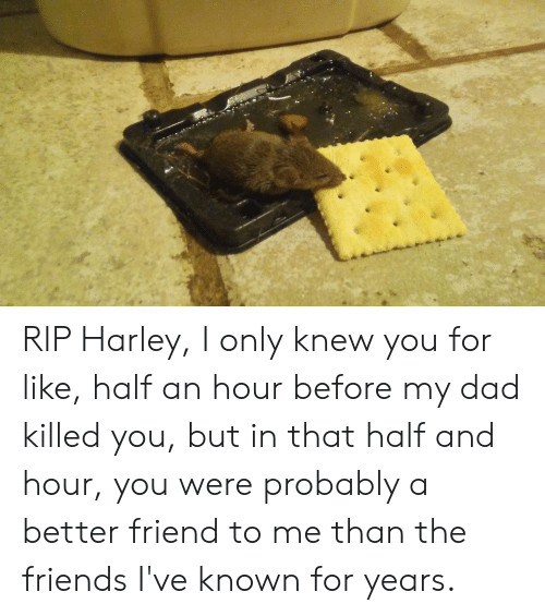 Dad, Friends, and Harley: RIP Harley, I only knew you for like, half an hour before my dad killed you, but in that half and hour, you were probably a better friend to me than the friends I've known for years.