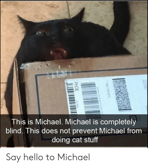Hello, Michael, and Stuff: rm  This is Michael. Michael is completely  blind. This does not prevent Michael from  doing cat stuff Say hello to Michael