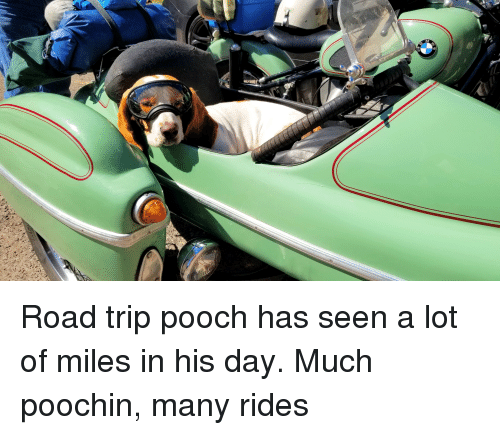 pooch: Road trip pooch has seen a lot of miles in his day. Much poochin, many rides
