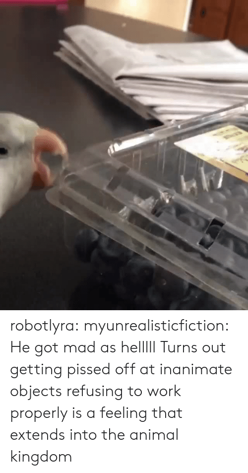 animal kingdom: robotlyra:  myunrealisticfiction: He got mad as helllll Turns out getting pissed off at inanimate objects refusing to work properly is a feeling that extends into the animal kingdom
