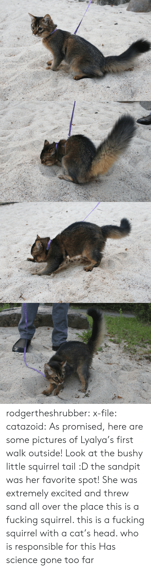 Fucking, Head, and Tumblr: rodgertheshrubber: x-file:  catazoid:  As promised, here are some pictures of Lyalya's first walk outside! Look at the bushy little squirrel tail :D the sandpit was her favorite spot! She was extremely excited and threw sand all over the place  this is a fucking squirrel. this is a fucking squirrel with a cat's head. who is responsible for this   Has science gone too far