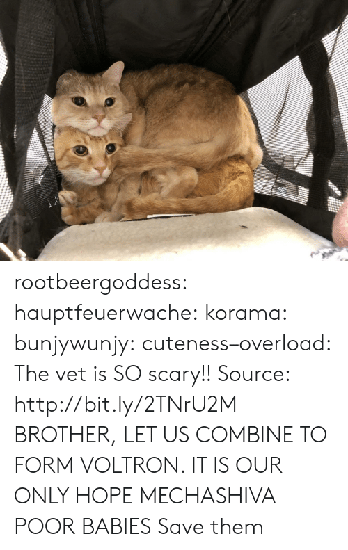 Tumblr, Blog, and Http: rootbeergoddess: hauptfeuerwache:  korama:   bunjywunjy:  cuteness–overload:   The vet is SO scary!! Source: http://bit.ly/2TNrU2M   BROTHER, LET US COMBINE TO FORM VOLTRON. IT IS OUR ONLY HOPE   MECHASHIVA   POOR BABIES   Save them