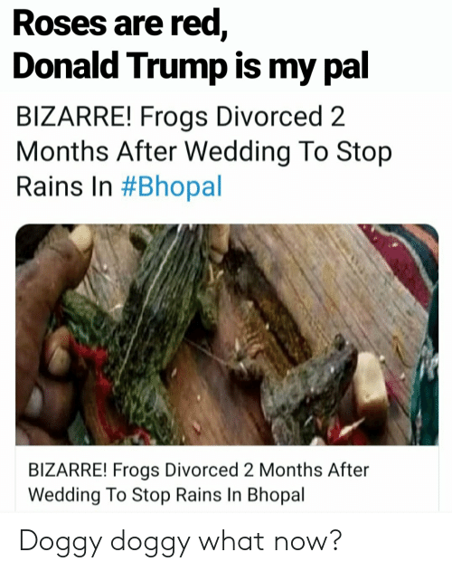 Donald Trump, Trump, and Wedding: Roses are red,  Donald Trump is my pal  BIZARRE! Frogs Divorced 2  Months After Wedding To Stop  Rains In #Bhopal  BIZARRE! Frogs Divorced 2 Months After  Wedding To Stop Rains In Bhopal Doggy doggy what now?